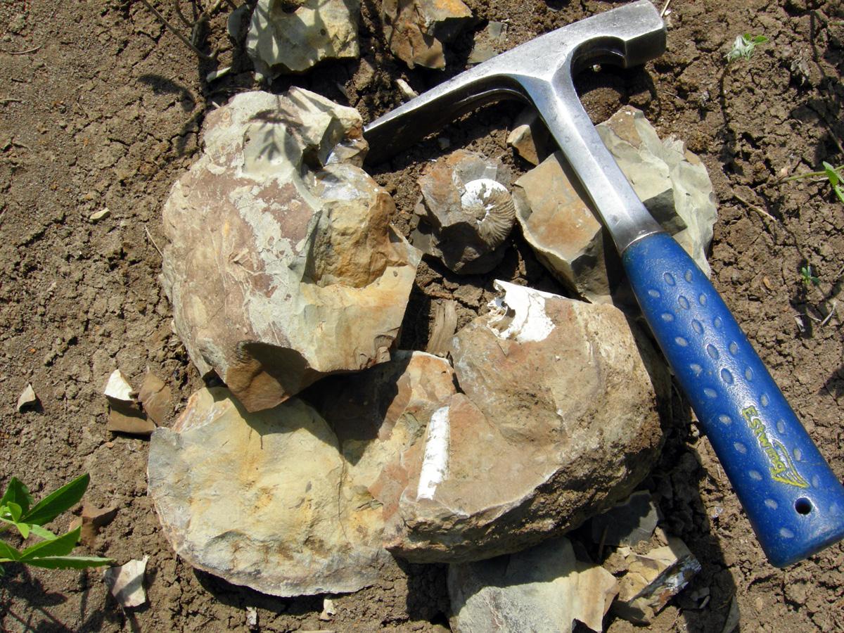 A most impressive geological specimen.